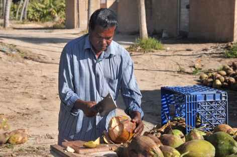 Vendeur de noix de coco à Salalah - Oman -