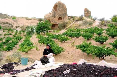 Dans la vallée Rouge, récolte du raisin (septembre), Cappadoce - Turquie -