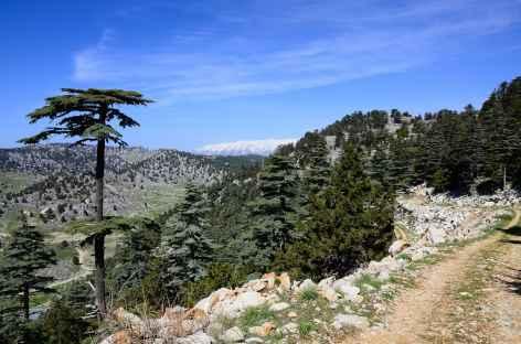 Rando vers le col du Mont Olympe, Lycie - Turquie -
