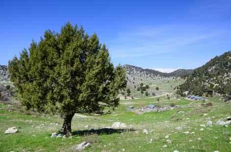 Plateau proche du col du Mont Olympe, Lycie - Turquie -