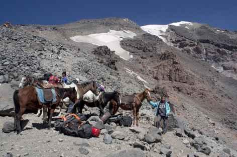 Nos mules, au loin le sommet ! -