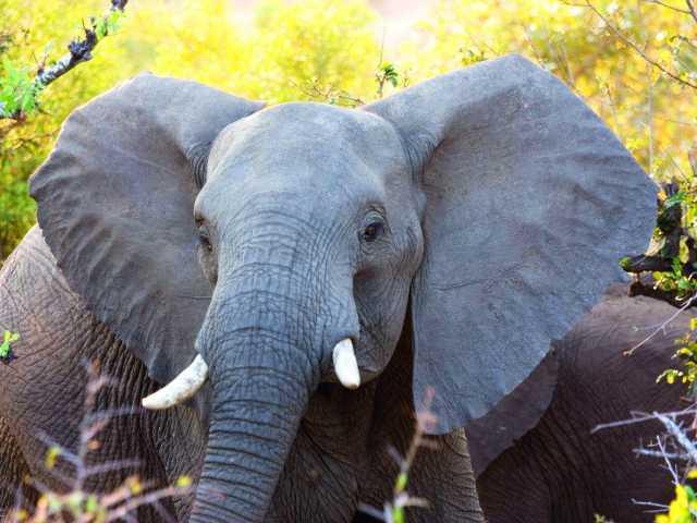 Safari dans le Parc national d'Addo Elephant (Afrique du Sud), © Christian Leroy - Tirawa