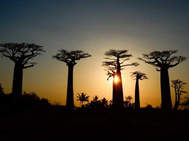 Coucher de soleil sur l'Allée des Baobabs - Madagascar, © Julien Erster - TIRAWA