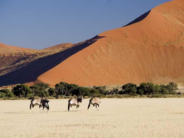 Oryx dans le désert du Namib - Namibie, © Christian Juni - Tirawa