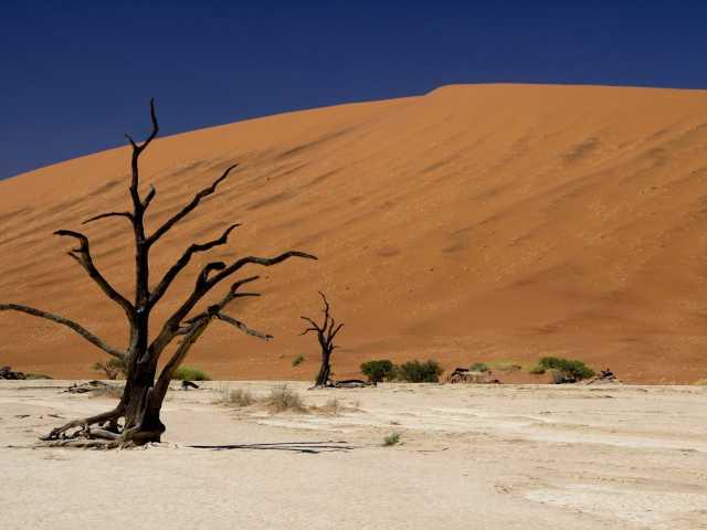 Dépression de Deadvlei - Namibie, © Julien Erster - TIRAWA