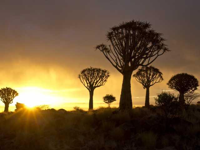 Forêt de kokerboom au coucher du soleil - Namibie, © Julien Erster - TIRAWA