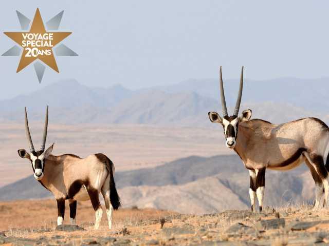 Oryx du Kaokoland - Namibie, © David Rey
