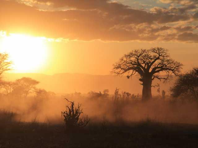 Brousse au coucher du soleil - Tanzanie,