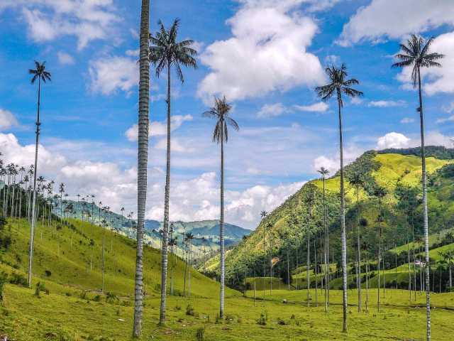 Les palmiers de cire de la vallée de Cocora - Colombie, © Mathieu Perrot-Borhinger
