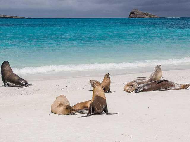 Phoques sur la plage - Extension Galapagos, © TIRAWA