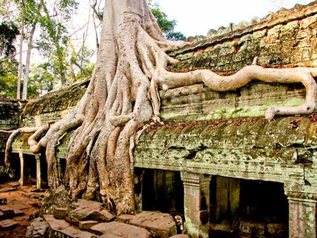 Ta Phrom - Cambodge, © TIRAWA