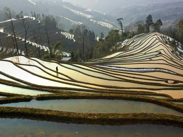 Rizières de Yuanyang - Yunnan, Chine, © Tirawa