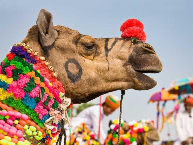 Foire aux chameaux de Pushkar - Rajasthan, © istockphoto.com
