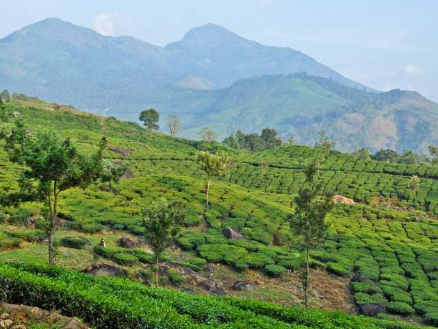 Montagnes et plantations de la région de Munnar, Inde du Sud, © Géraldine Benestar - Tirawa
