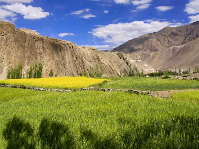 Dans la campagne de la vallée de l'Indus - Ladakh - Inde, © Guillaume Chenot - Tirawa