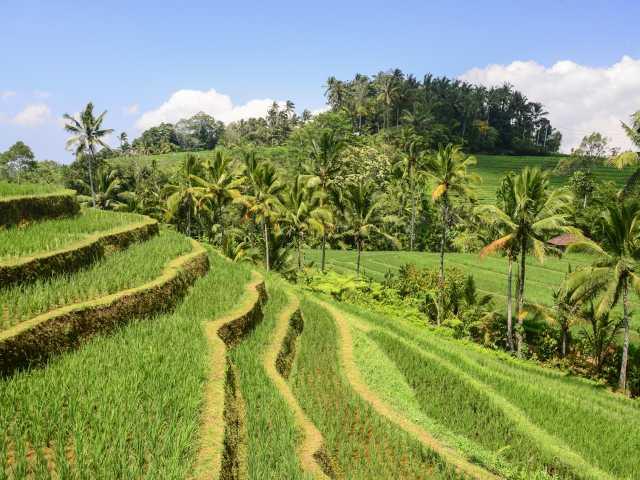 Rizières en terrasses de Belimbing, Bali - Indonésie, © Julien Erster - TIRAWA