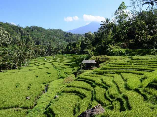 Rizières en terrasses entre Belimbing et Wongayagede, Bali - Indonésie, © Julien Erster - TIRAWA