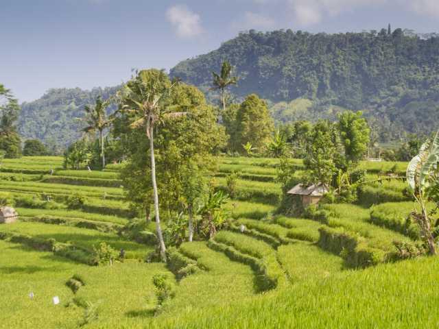 Rizières vers Sidemen, Bali - Indonésie, © Christian Leroy - TIRAWA