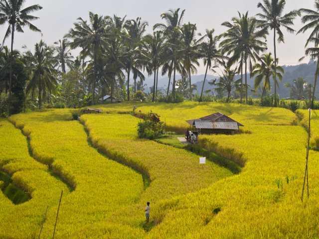 Rizières de Bali, vers Sidemen, Bali - Indonésie, © Christian Leroy - TIRAWA