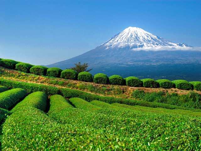 Belle vue sur le Fuji (3776 m), sommet du Japon, © Luciano Lepre