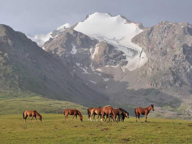 Chevaux semi-sauvages - Kirghizie, © Tirawa