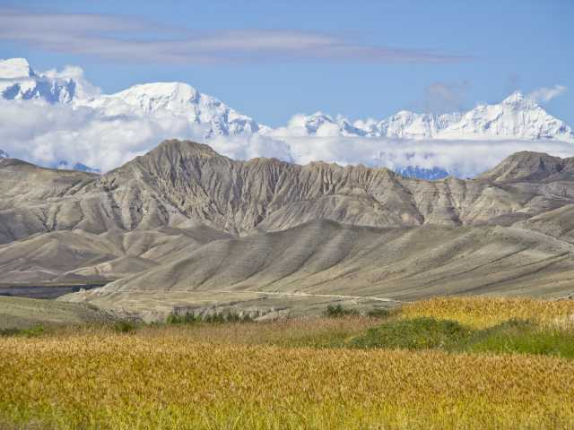 Champs du Mustang et les Annapurna, fin Aout - Nepal, © Christian Leroy - TIRAWA