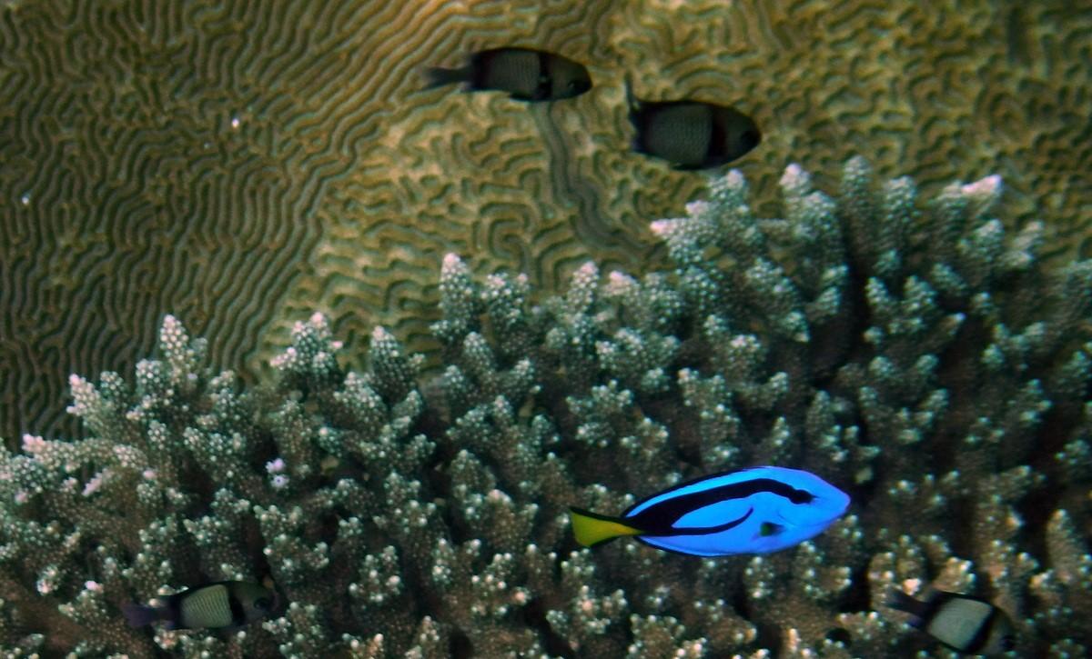 Fond marin raja ampat