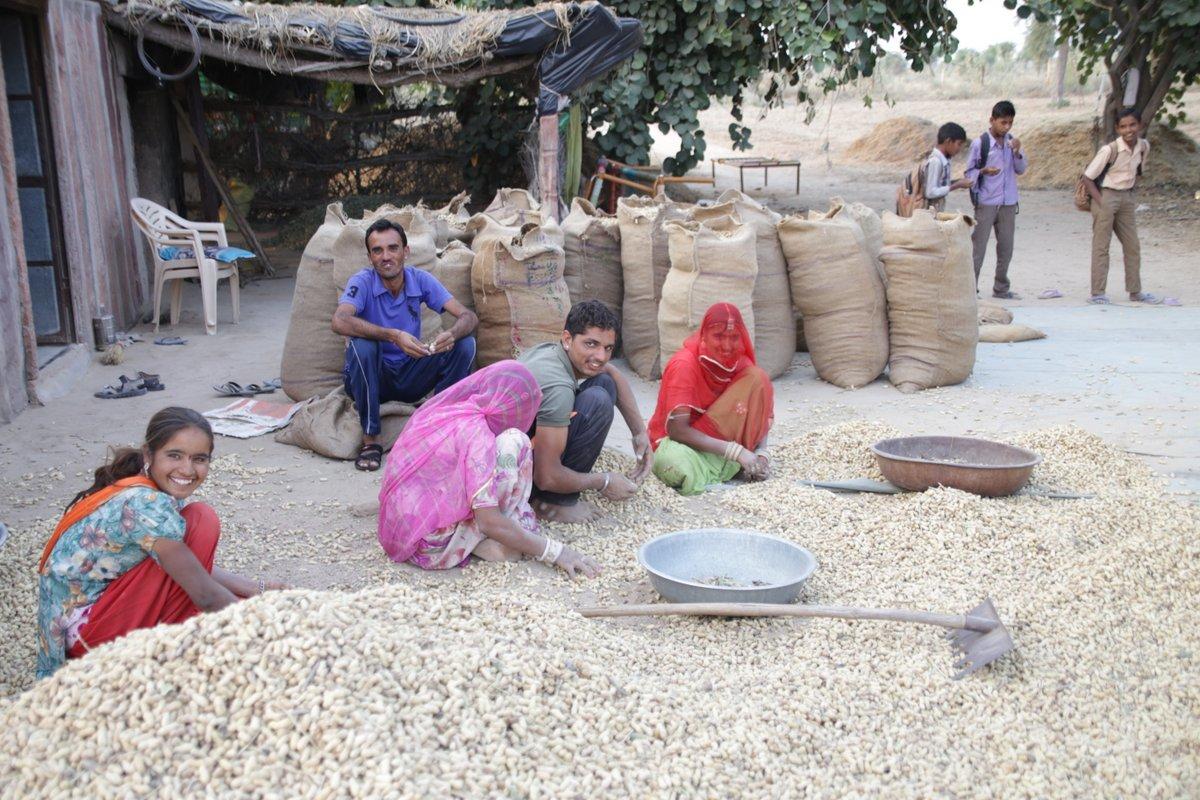 Désert du Thar Rencontres récolte arachide