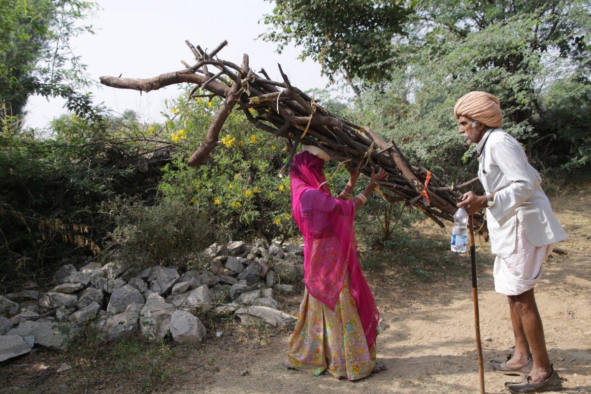 ramassage du bois Rajasthan