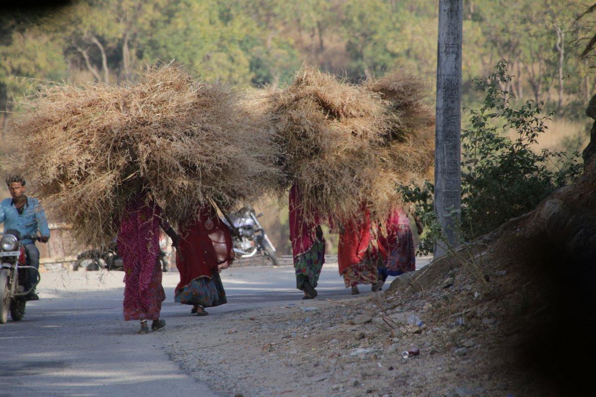 Travaux des champs Udaïpur