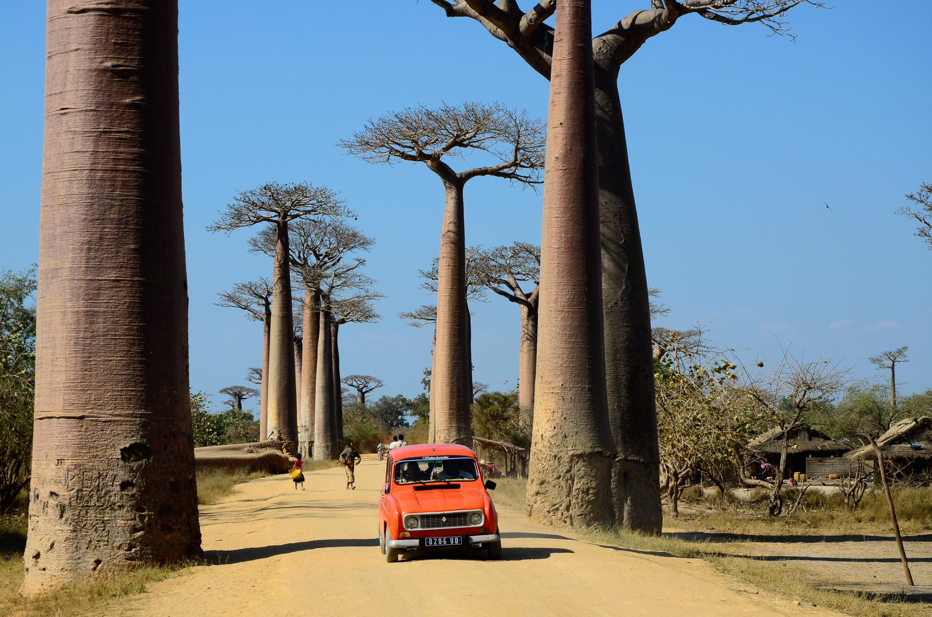 Baobab madagascar voyage tirawa