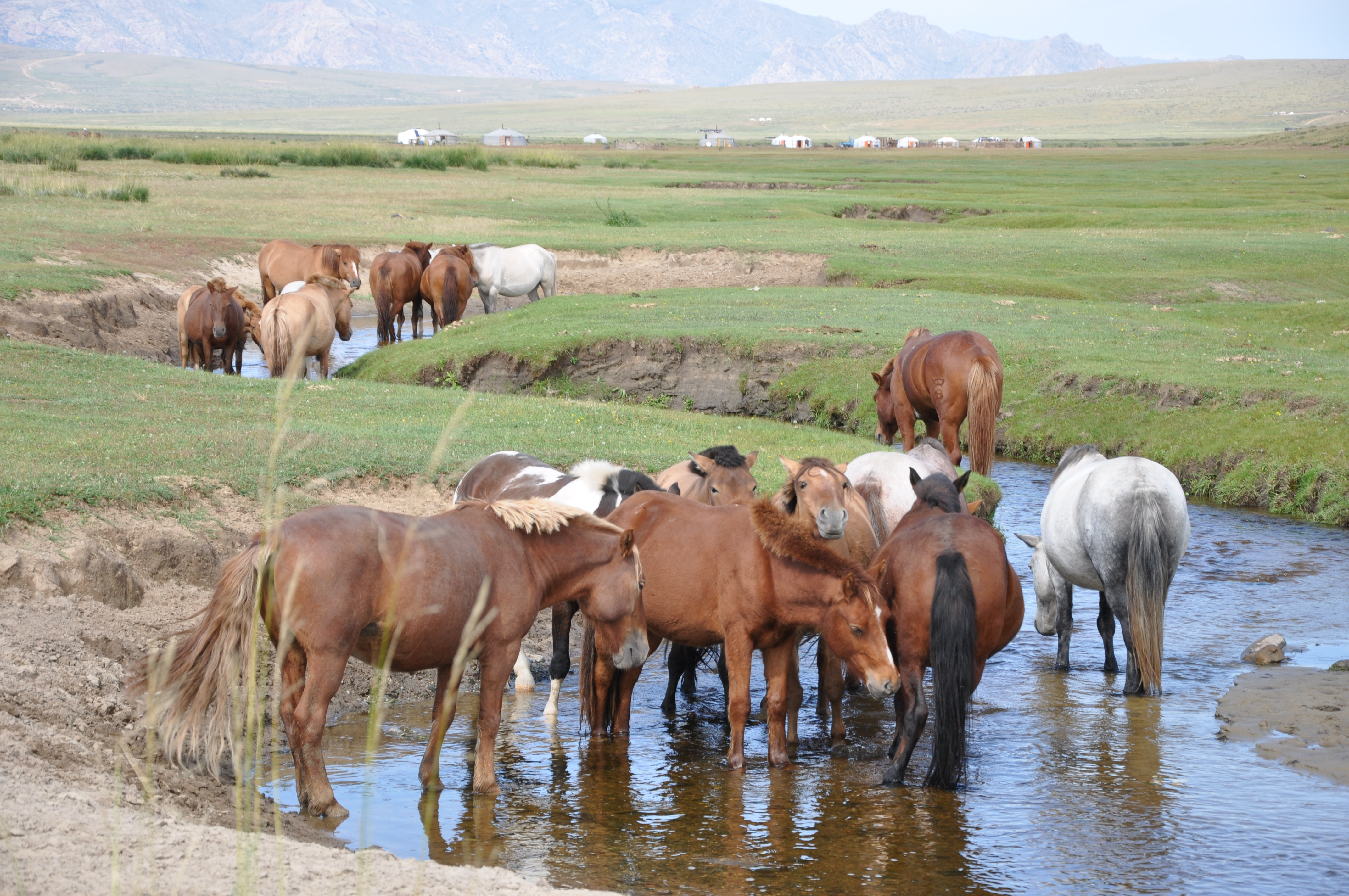 Immersion chez les Mongols - Claire Tissot