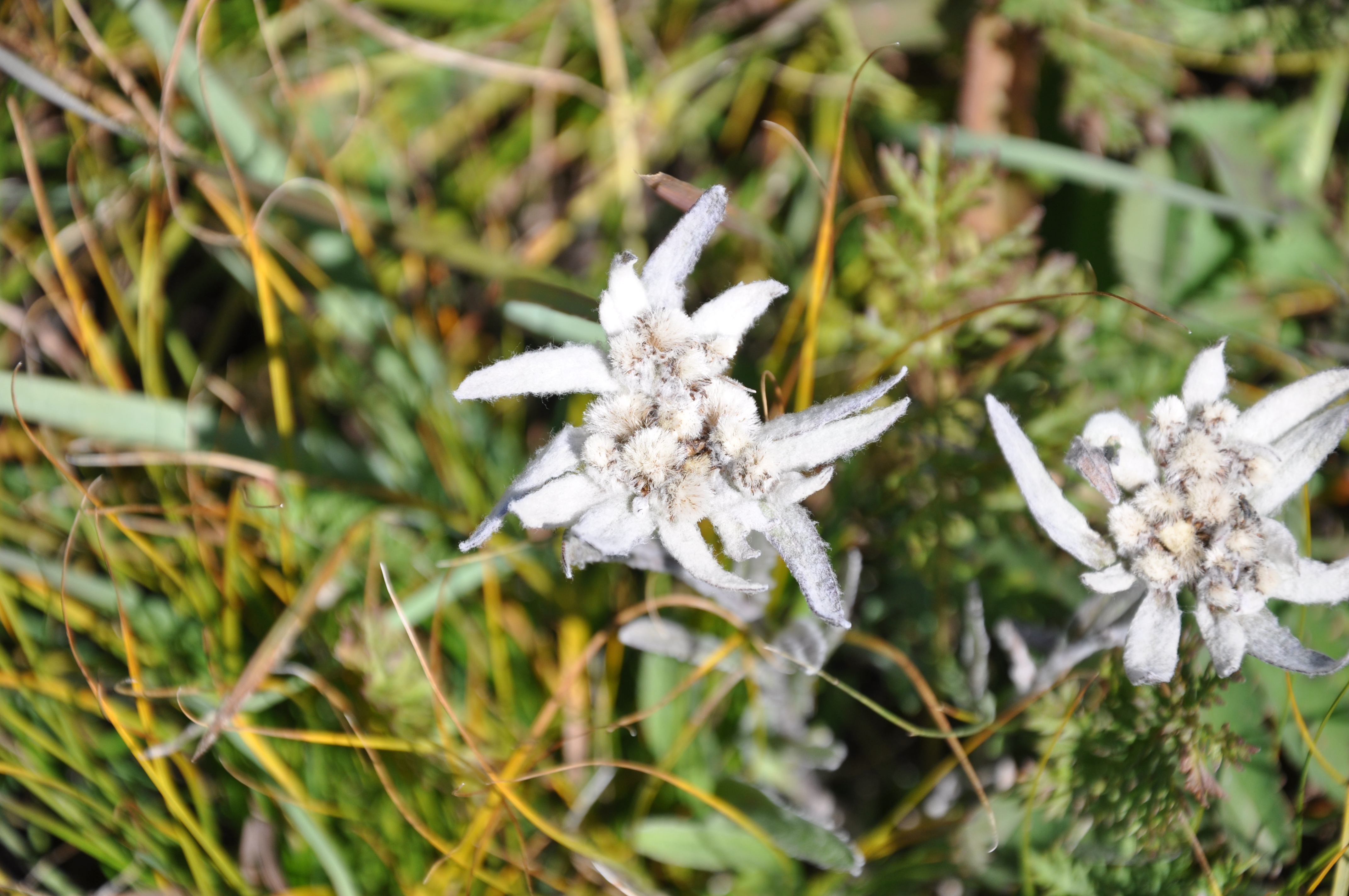 Edelweiss Mongolie - Claire Tissot