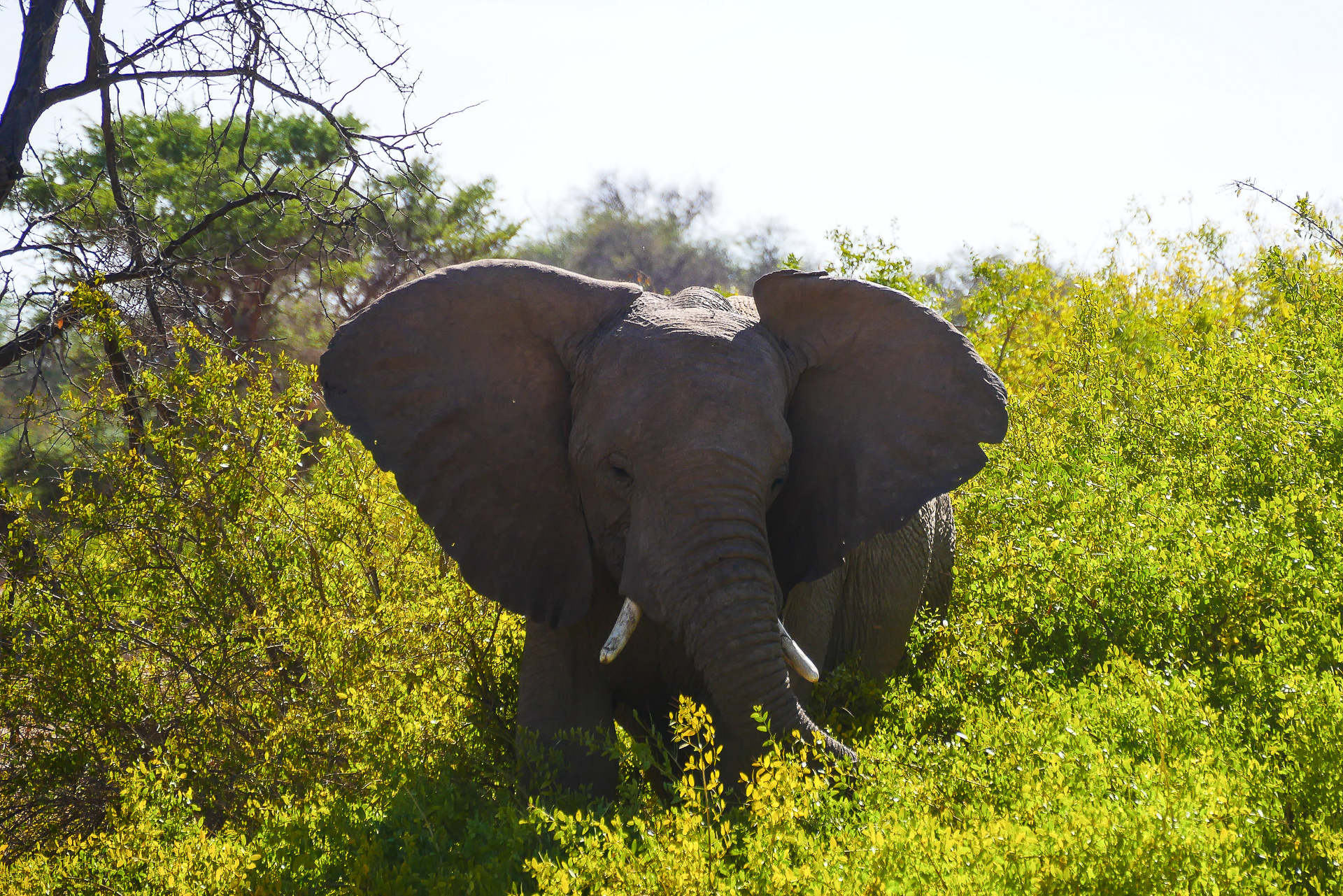 éléphants du desert Namibie