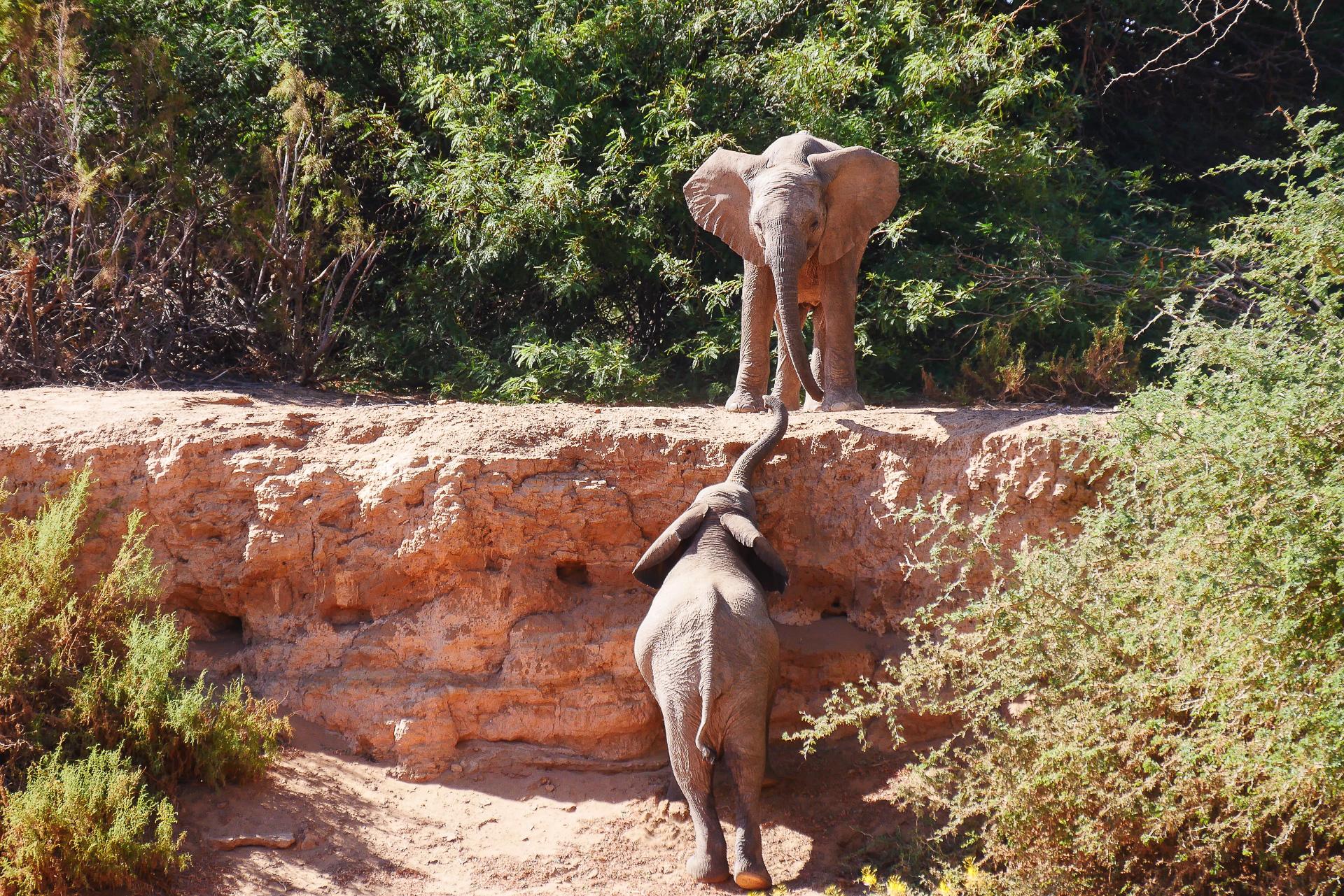 bebe  éléphants du desert Namibie