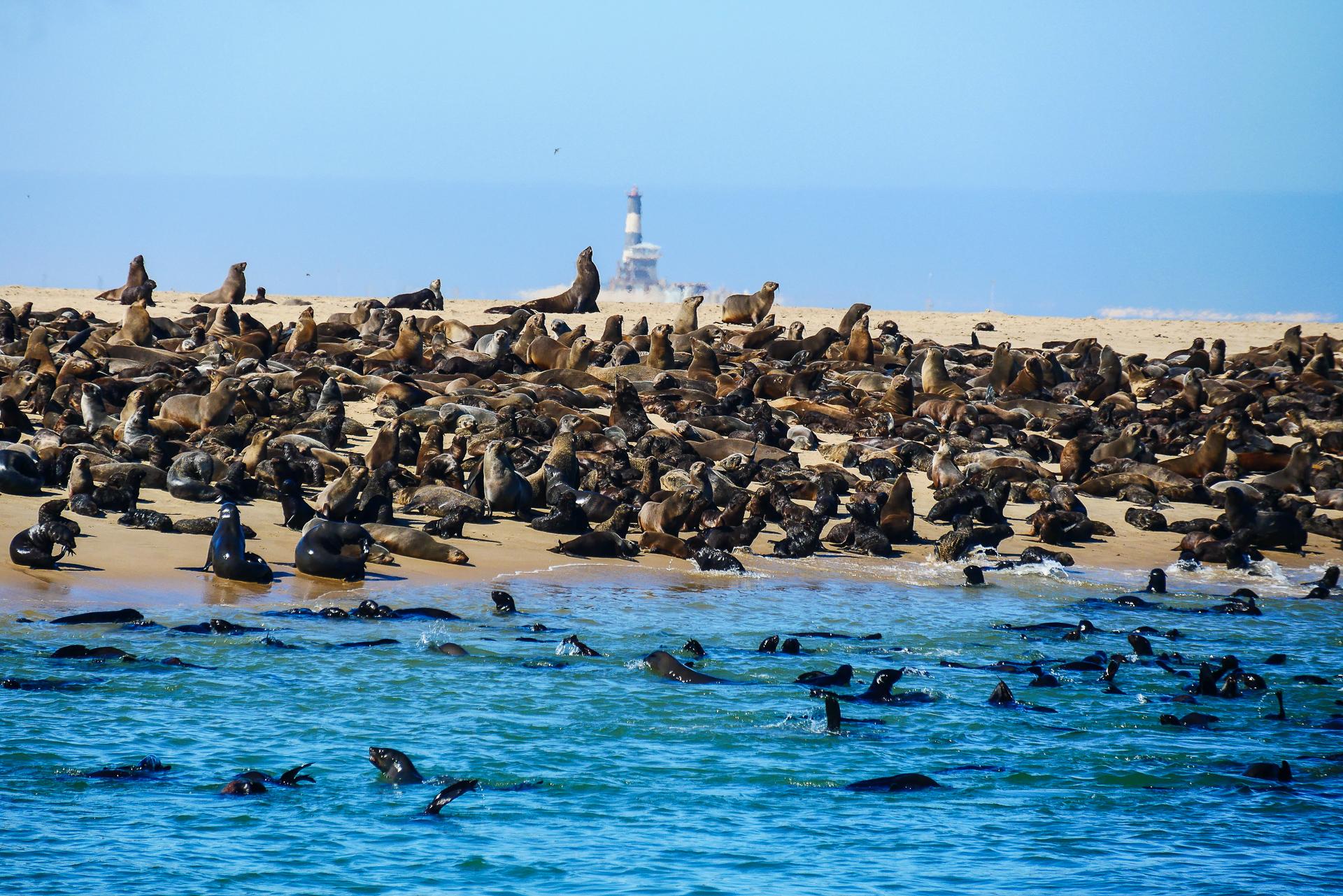 Walvis bay Otaries Namibie