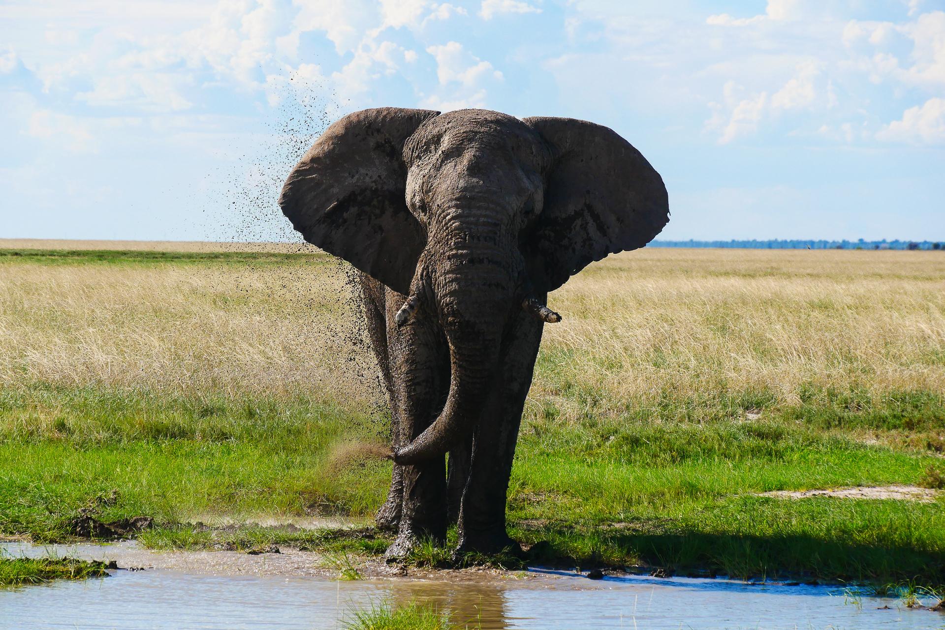 Elephant parc etosha Namibie