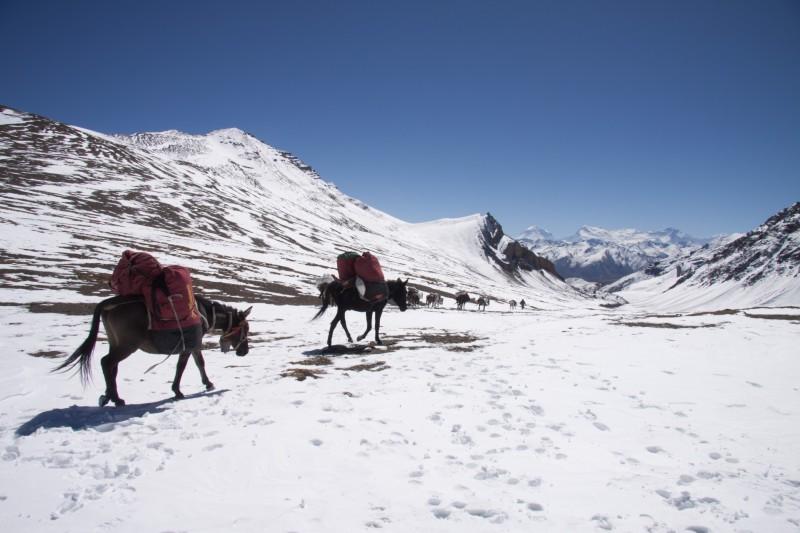 Dolpo pa et chevaux Népal