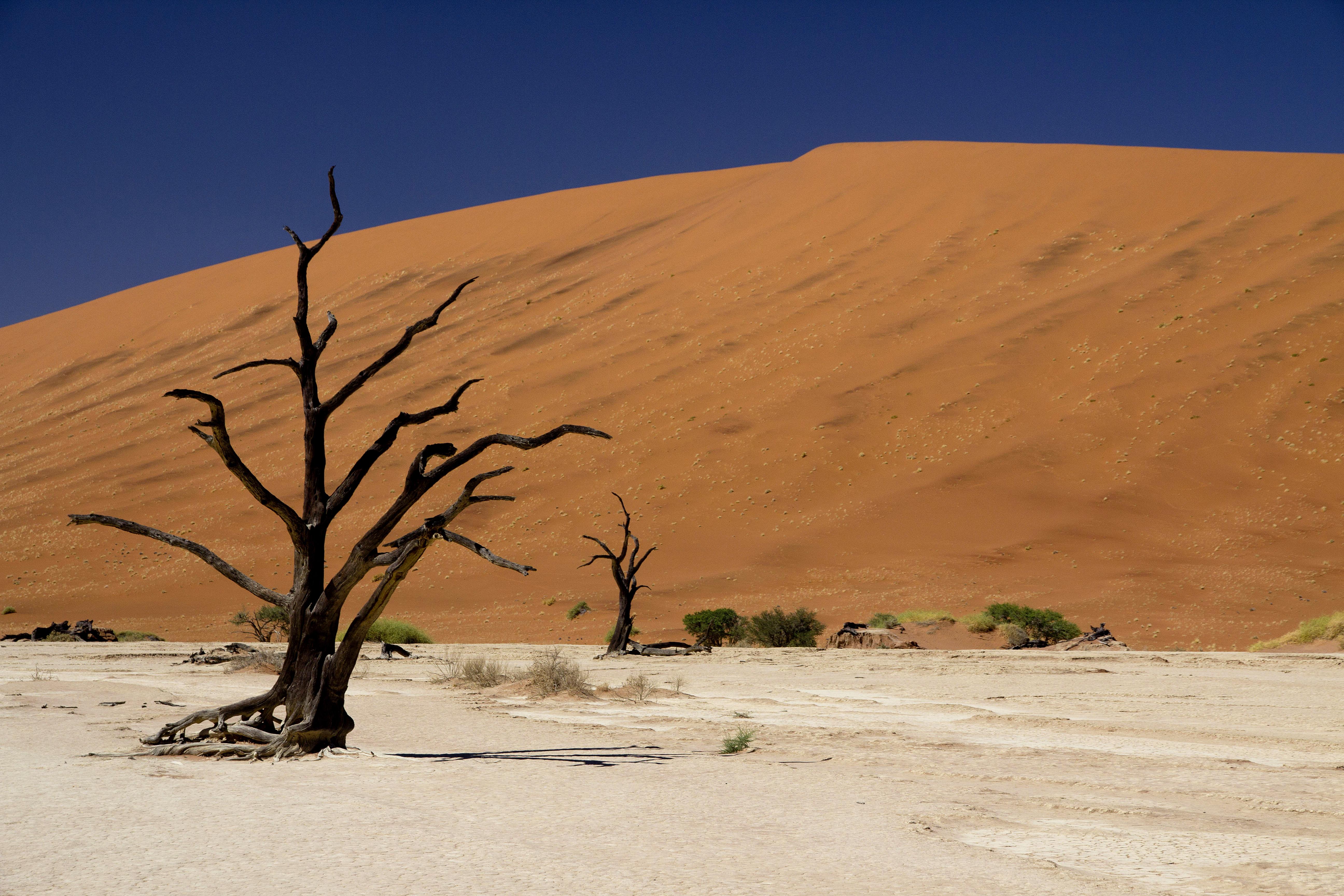 Dune Namib sossusvlei deadvlei