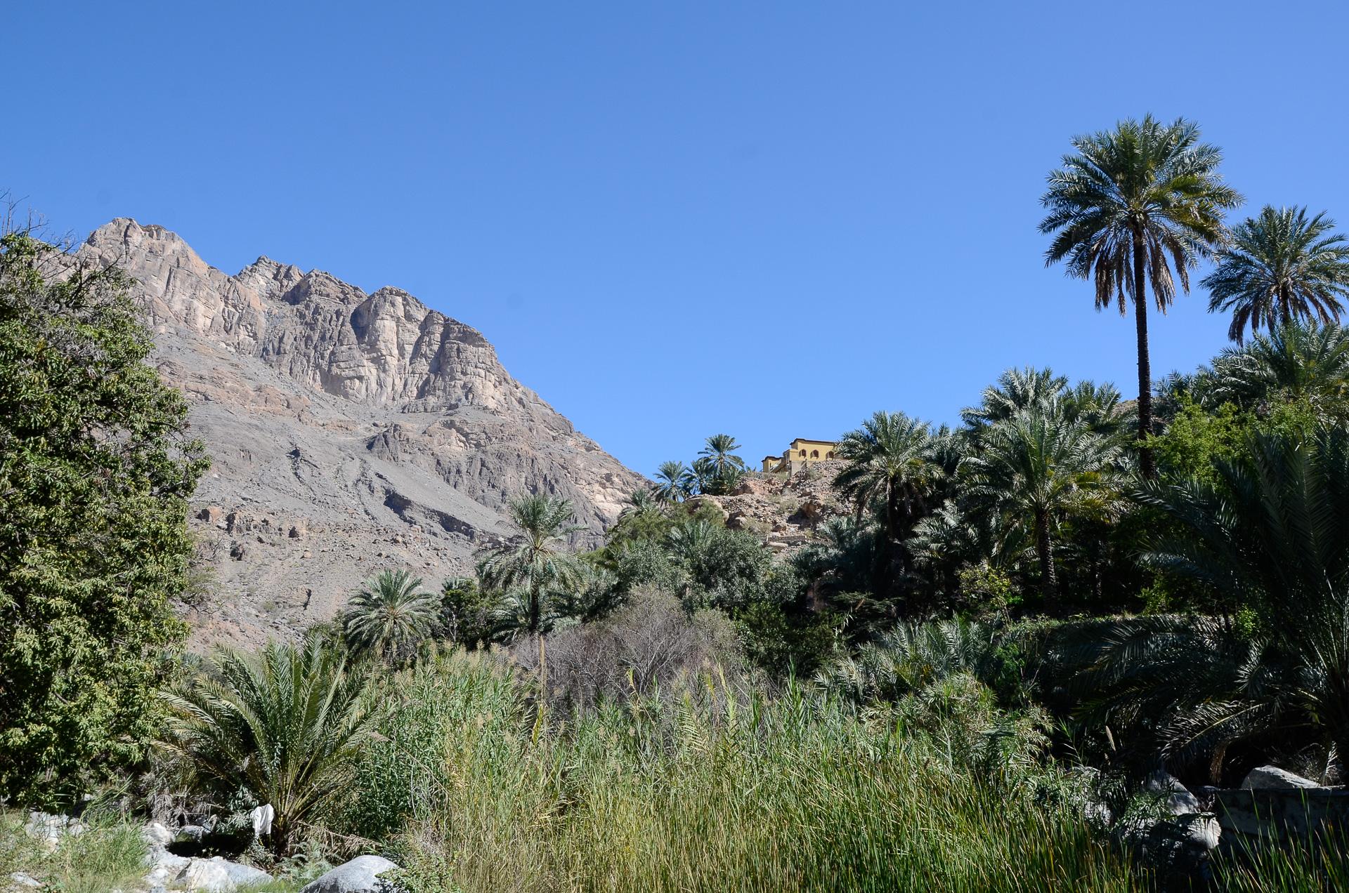 Palmeraie du Wadi Bani Kharus