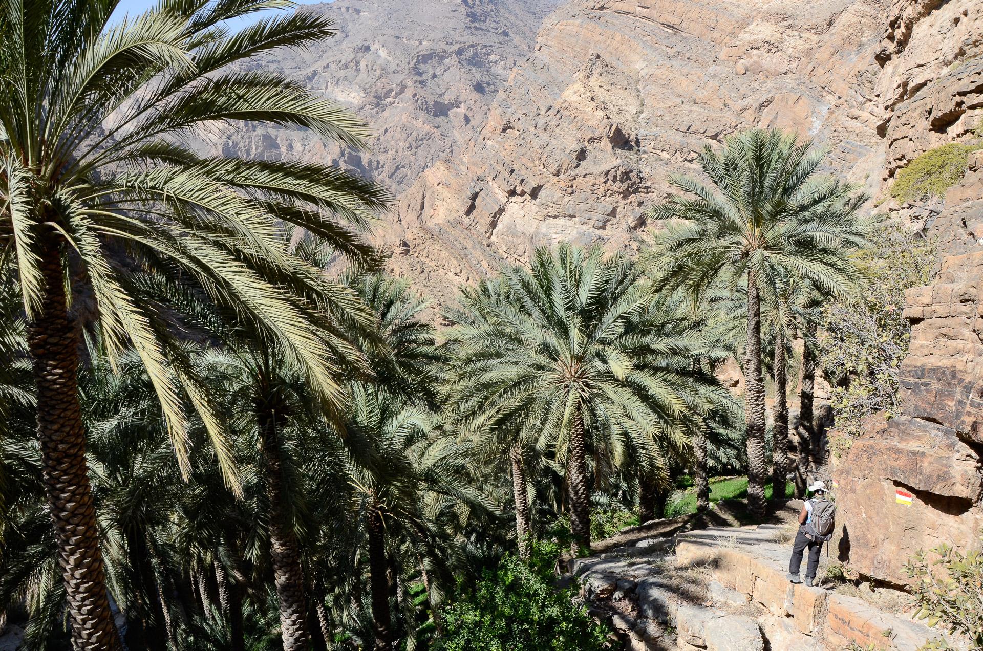 Palmeraie typique du Djebel Akhdar