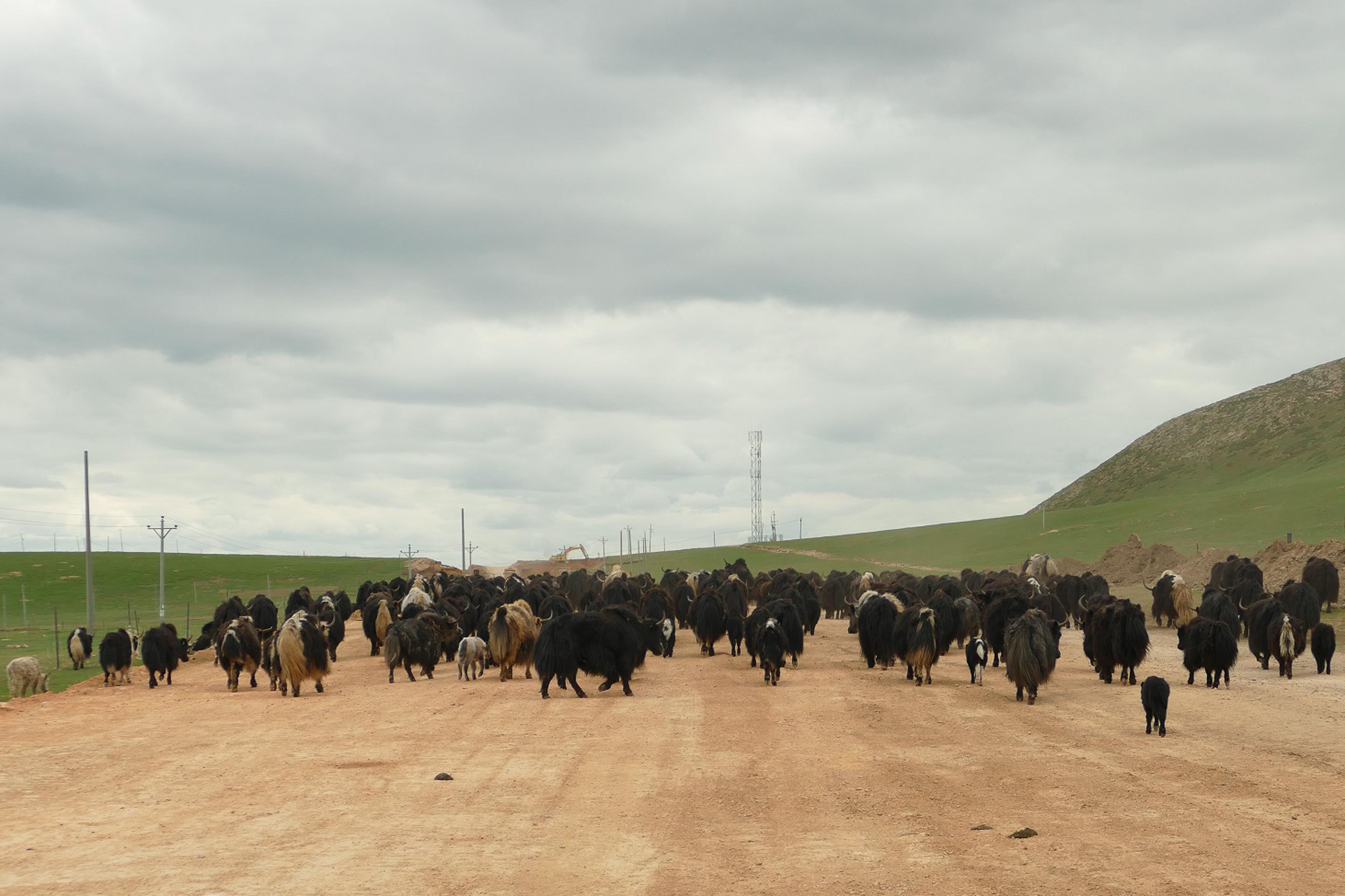 voyage Tibet, sur la route de l'Amdo