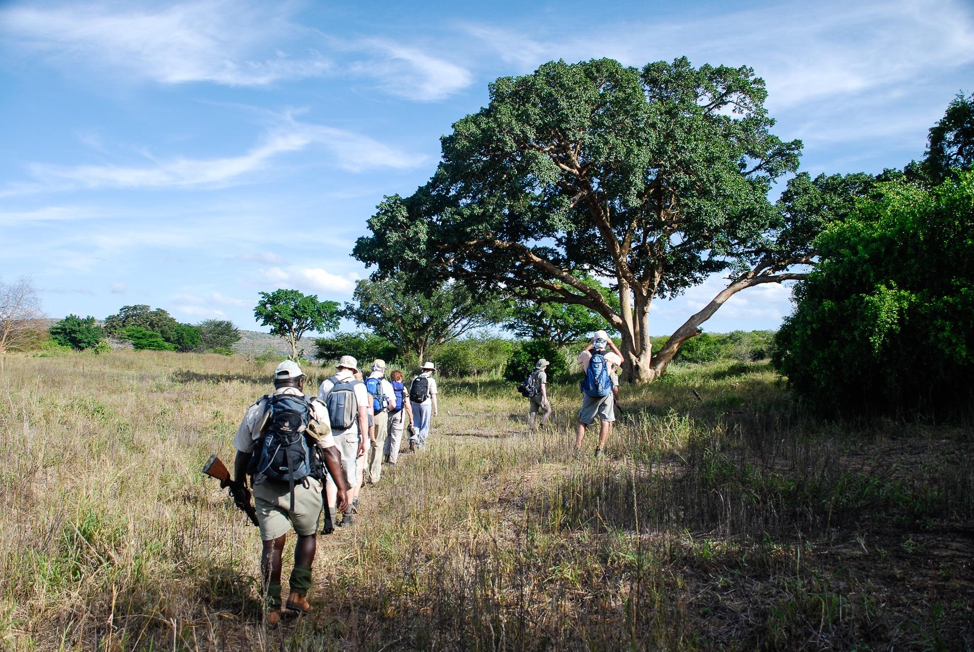 Safari à pied dans le parc Kruger - Afrique du Sud