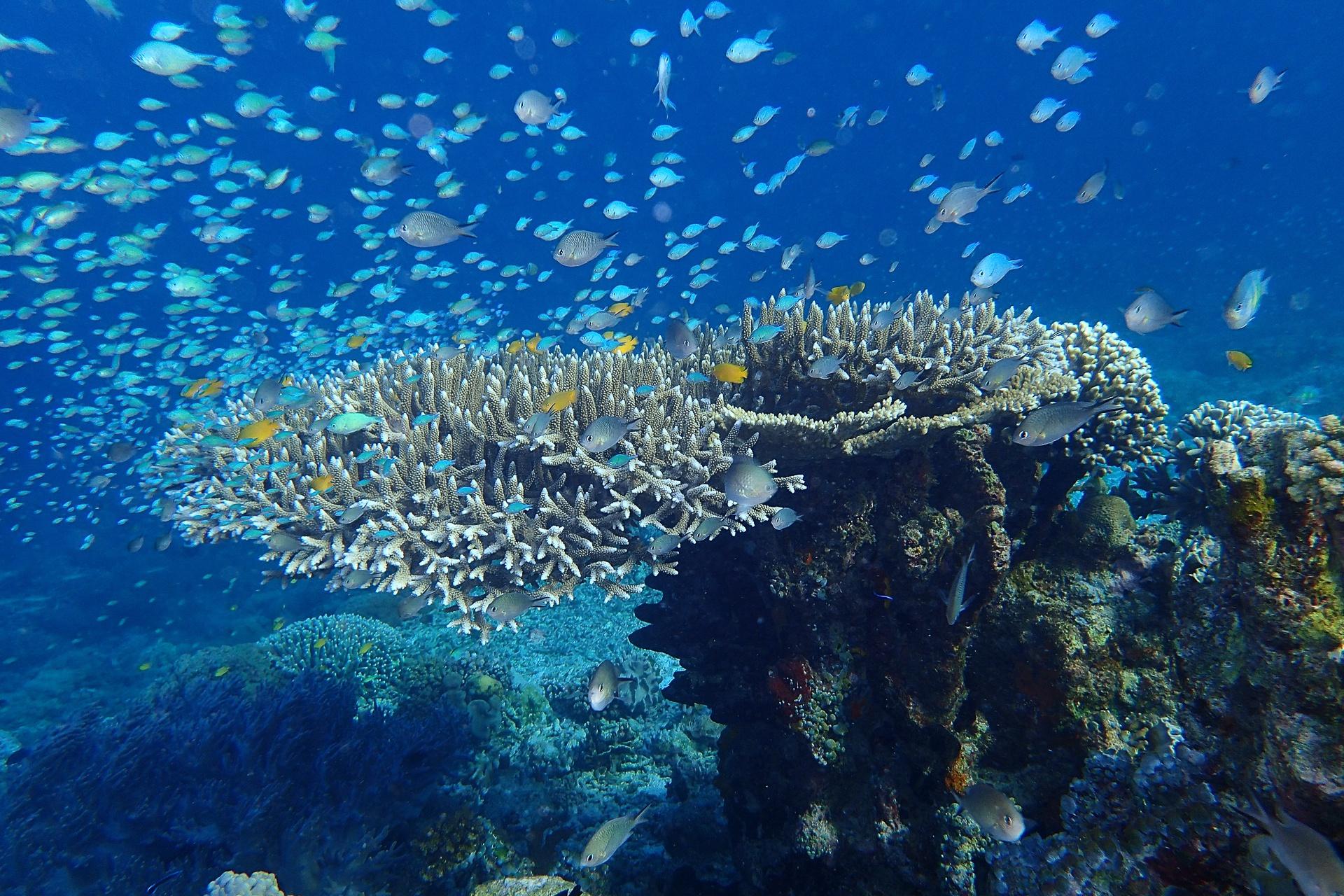 Superbes fonds marins en Indonésie