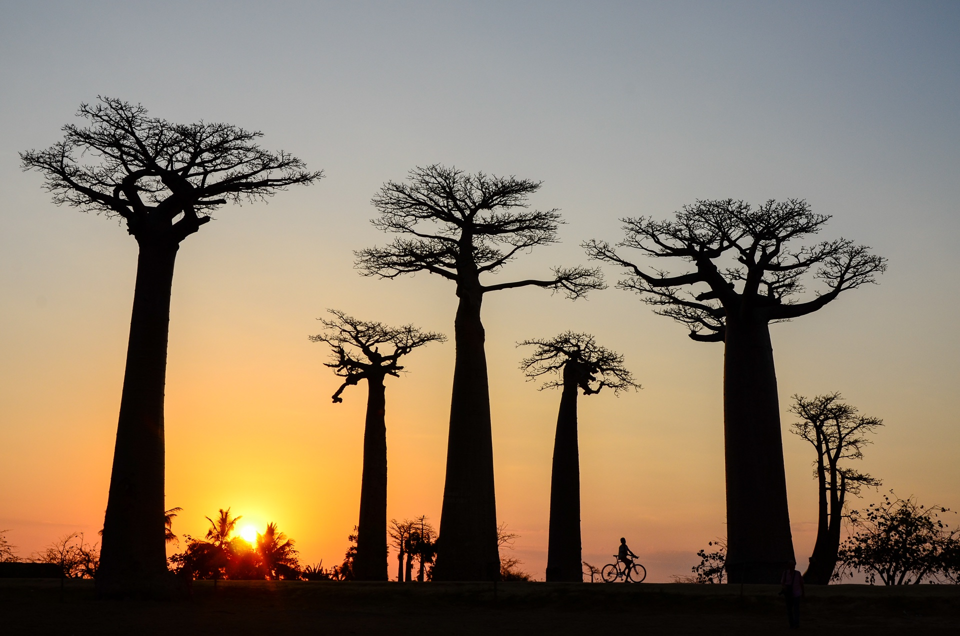 Allée de Baobab Madagascar