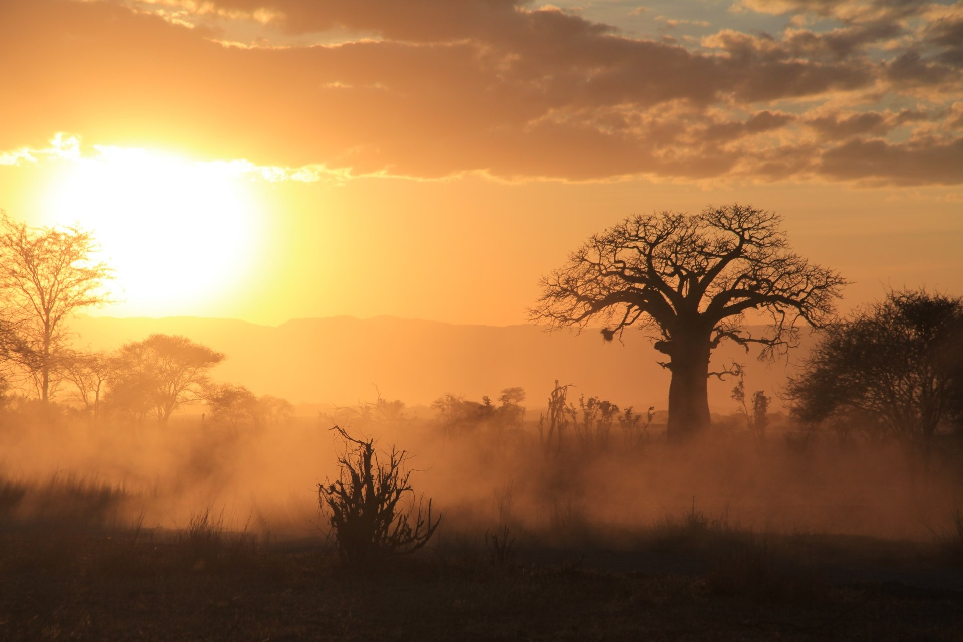 Brousse au coucher du soleil Tanzanie