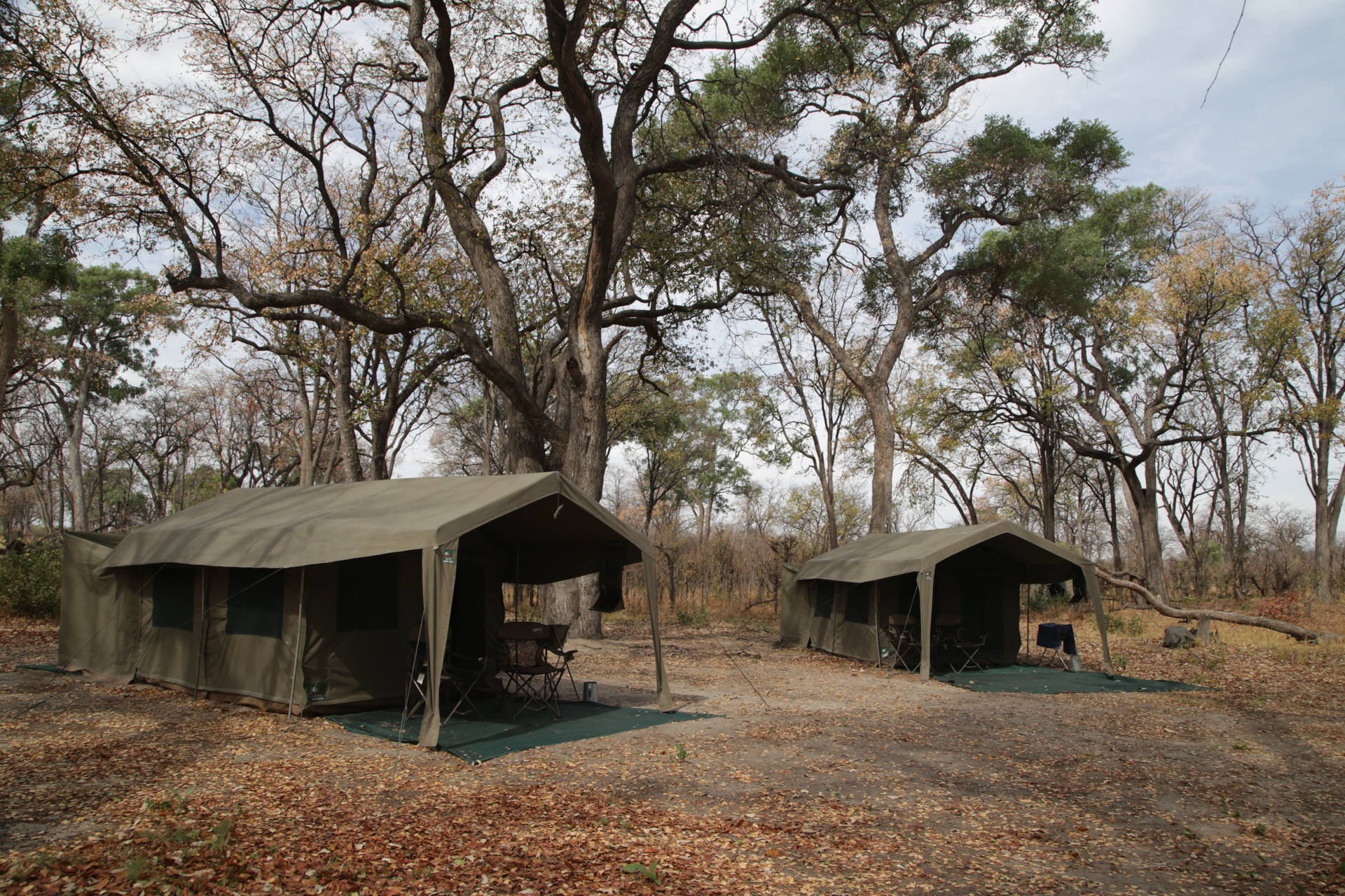 Camp de toile tout confort Safari Botswana Moremi