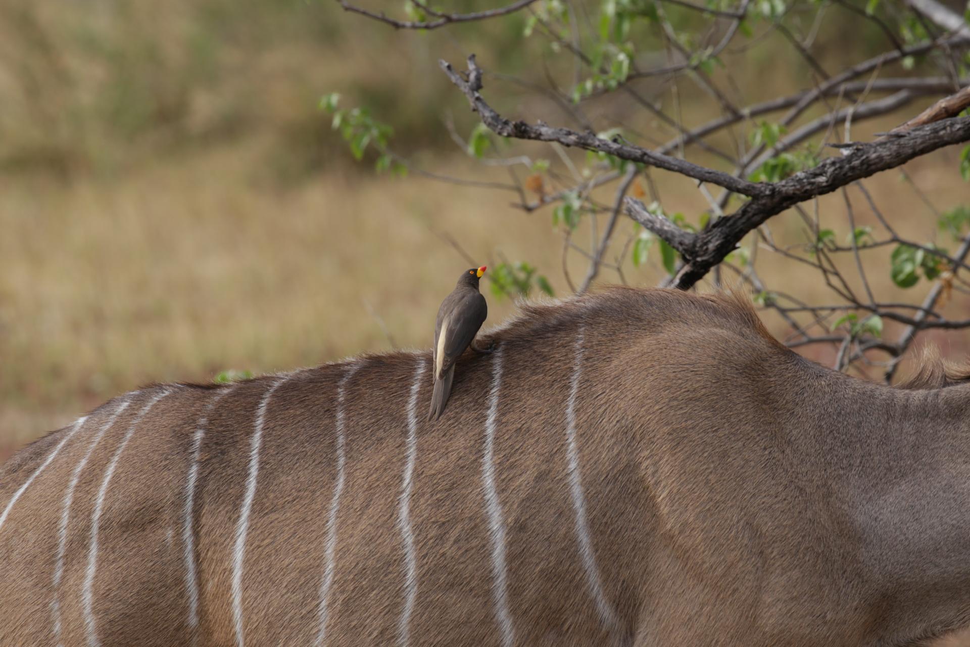 oiseau safari botswana Moremi Okavango