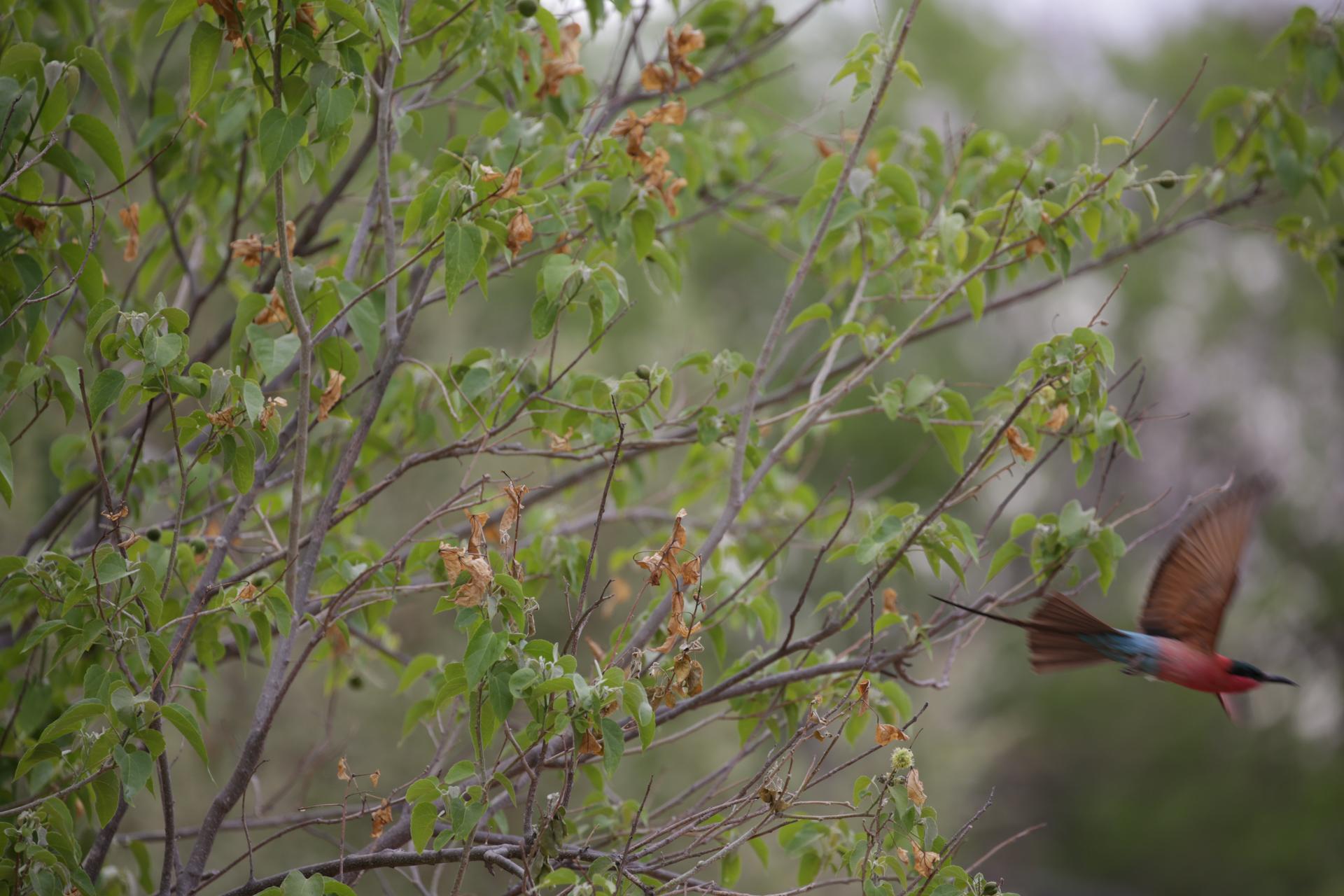 oiseaux safari botswana Moremi Okavango