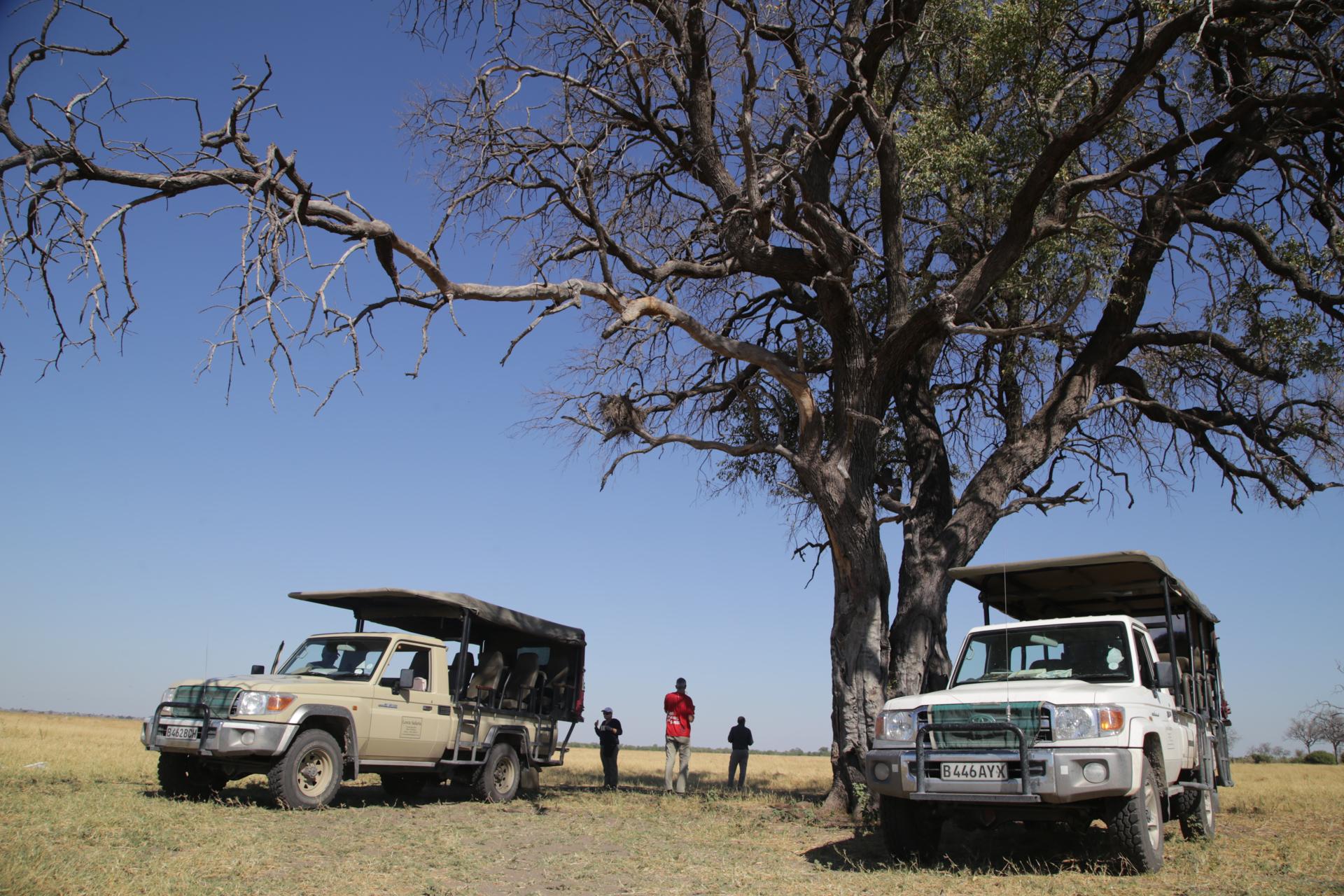 Camp et véhicule safari savuti